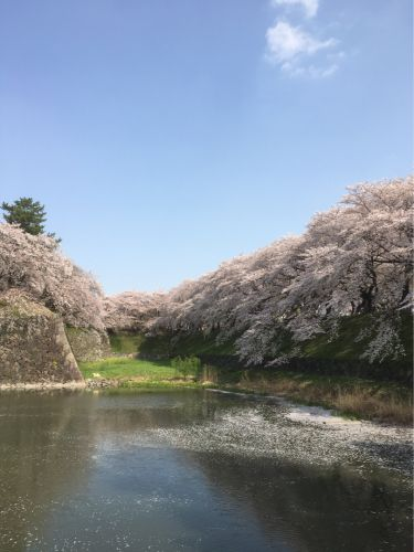 名古屋城 〜桜を観る 2018 外堀〜