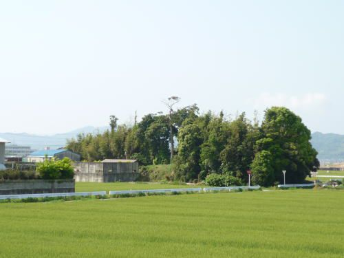 岡崎三奉行のひとり天野康景の生誕地と考えられる居城・幸田町の三河坂崎城跡
